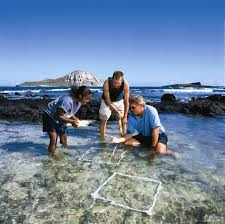 Hawaii Pacific University Marine Biology
